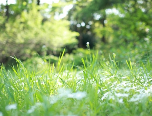 亀山市で土地活用にお悩みの方は地元密着型のアップルクスへご相談を~空き地・空き家をお持ちの方必見!空き家対策特別措置法とは?~